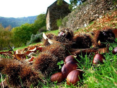 Nature aux Jardins de l'Hermite (Gard)