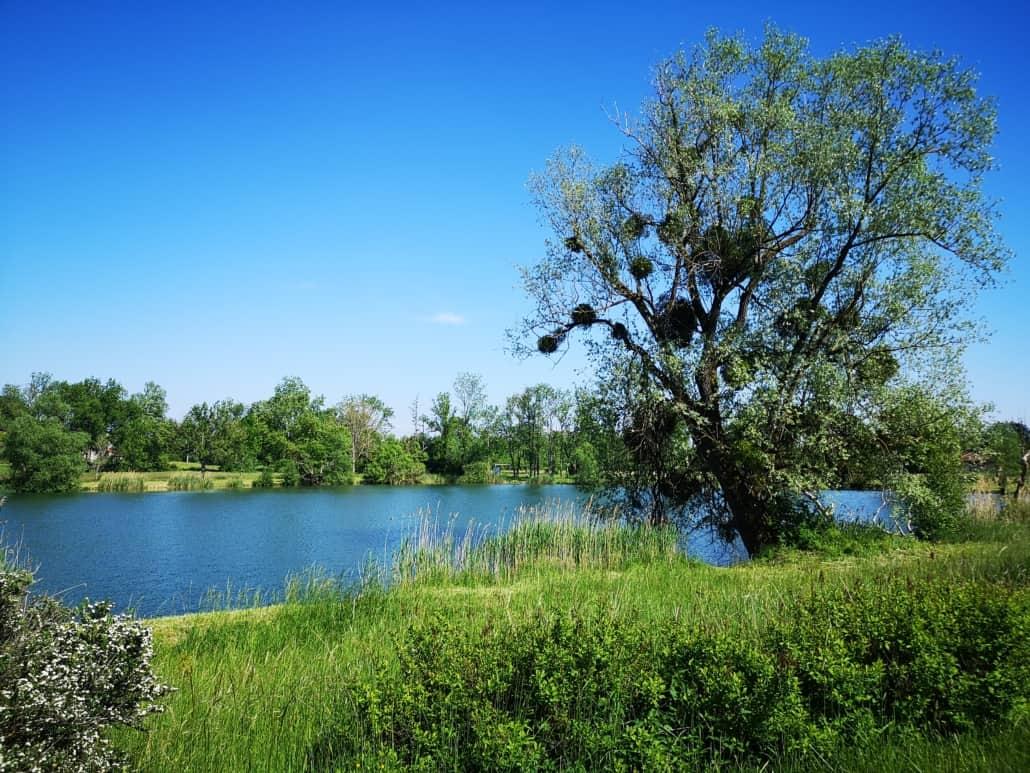 Etat Nature hébergement insolite à Magnières - vue sur l'étang